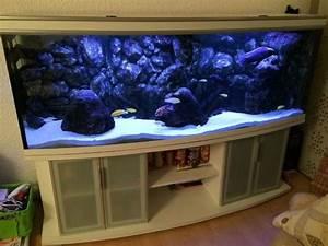Fische Aquarium Hamburg : aquarium malawi 750 liter gew lbte scheibe in hamburg ~ Lizthompson.info Haus und Dekorationen