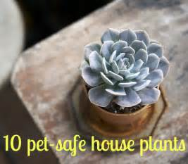 non toxic houseplants for cats keeping your pets safe 10 non toxic house plants aspca