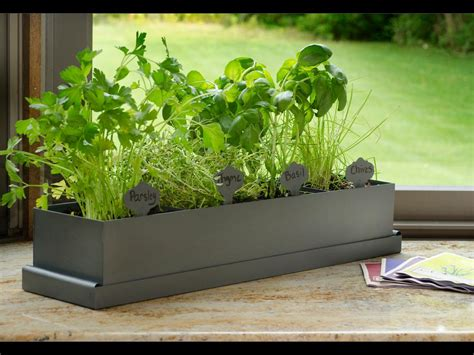 indoor herb garden kit indoor herb garden kits to grow herbs indoors hgtv