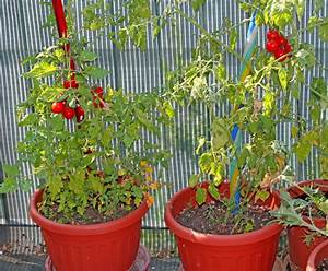 Tomaten Balkon Kübel : cocktailtomaten auf dem balkon pflanz pflegetipps ~ Yasmunasinghe.com Haus und Dekorationen