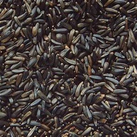 niger seed top 5 plants to attract birds and grow birdseed
