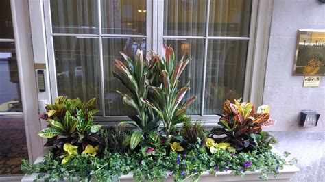 container shrubs for shade container plants for the shade
