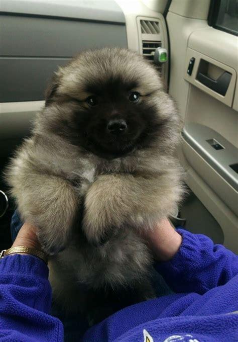 cutest puppies      bears