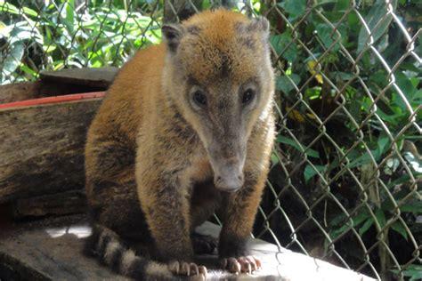 volunteer work   amazon ecuador animal santuary