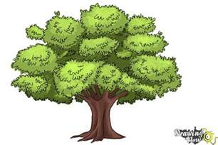 How to Draw Realistic Trees with Color