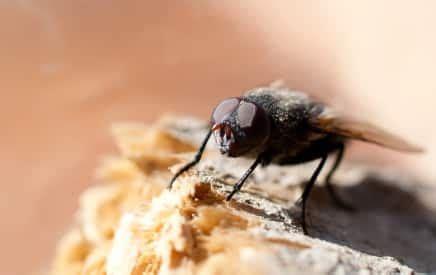 moucherons dans ma cuisine comment chasser les moucherons dans ma cuisine