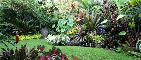 Tropical Plants For Garden Tropical Garden Plants Names