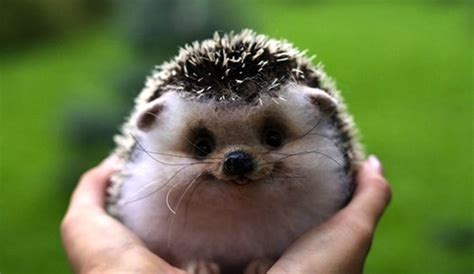 Adorable Smiling Animals Pictures