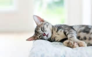 sleeping cat trouble staying awake in filmstrips