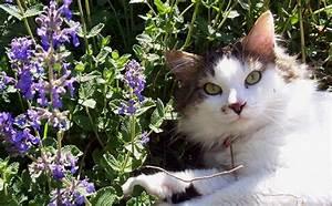 Blumen Für Südbalkon : blumen f r einen s dbalkon katzenminze ~ Watch28wear.com Haus und Dekorationen