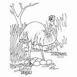 Emu Coloring Designlooter Wild 230px 06kb sketch template
