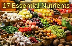 Ultimate Guide Of 17 Essential Nutrients Your Body Really