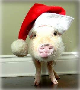 Gift Ideas for Mini Pig Lovers