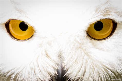 Harry Potter Wallpaper Hedwig Owl by Harry Potter Owl Wallpaper Impremedia Net