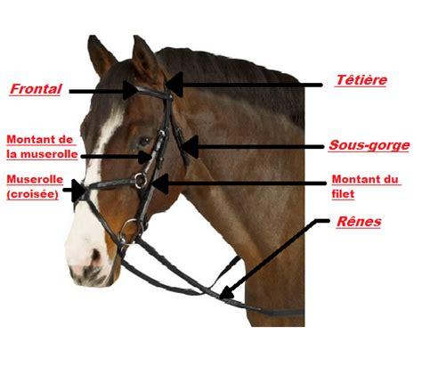 galop 1 partie du filet equitation technique et