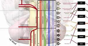 Brainstem Rules Of 4  U2022 Litfl  U2022 Neurology Clinical Exmaination