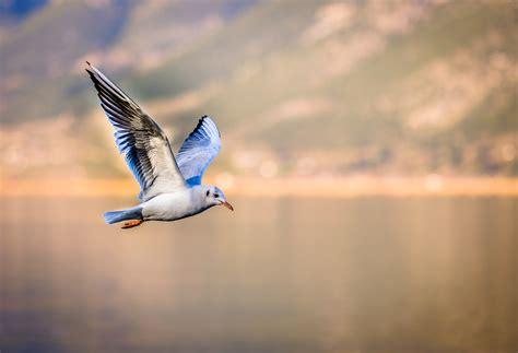 Birds never go deaf, but why do humans? - Scope