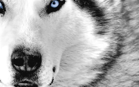cool animal backgrounds  images