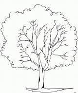 Coloring Elm Tree sketch template