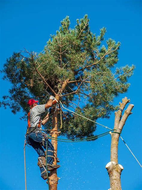 Tree Trimming Las Vegas Nv  Free Quick Quote  7028257270. Landscape Construction Software. Find Cheap Dental Implants Florida Oil Spill. Supination Running Shoes For Men. Birth Control Effective Rates. How Much Are Hair Transplants. Comptia Certification Login You Send It App. How To Buy And Trade Stocks Belfast Car Hire. University Of Carolina Bus Rentals New Jersey