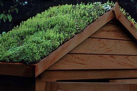 grass roof sheds eco friendly sheds turf roof sheds