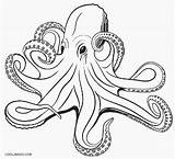 Octopus Coloring Pages Printable Realistic Adult Drawing Cool2bkids Drawings Ocean Animals Vector Children Clip Illustrations Sea Octopuses Clipart Royalty Tattoo sketch template