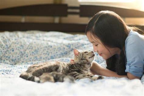 alimentazione diabetico alimentazione per il gatto diabetico mondopets it