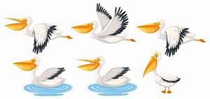 Set, Of, Pelican, Character, 297904