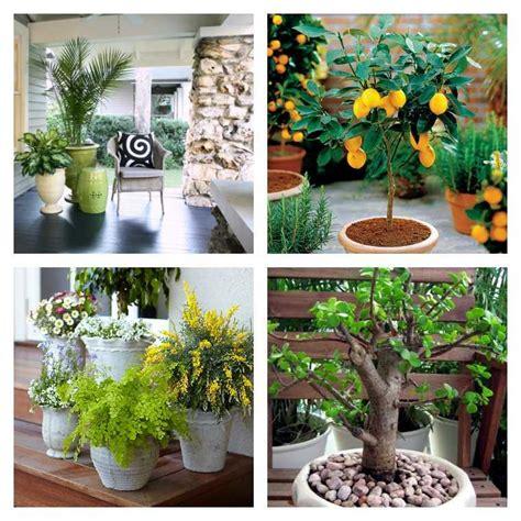 plantes pour chambre plante en pot pour terrasse 50 idées fraîches