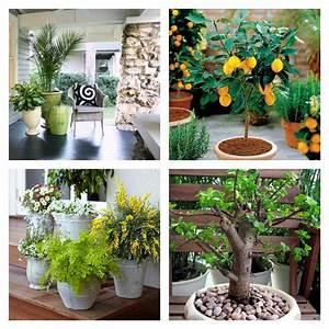 Plante En Pot Pour Terrasse 50 Ides Fraches