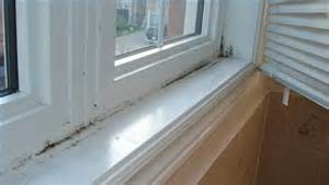 Removing Black Mold From Shower by Remove Black Mold On Pinterest Remove Mold Stains