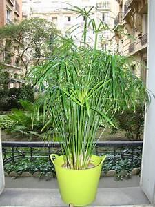 Plante D Extérieur En Pot : plante pour terrasse ma terrasse ~ Teatrodelosmanantiales.com Idées de Décoration