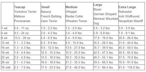 puppy growth charts  calculators  big   puppy  aussiedoodle  labradoodle