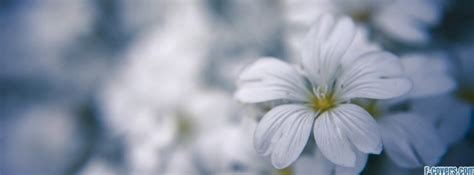 flowers white macro facebook cover timeline photo banner