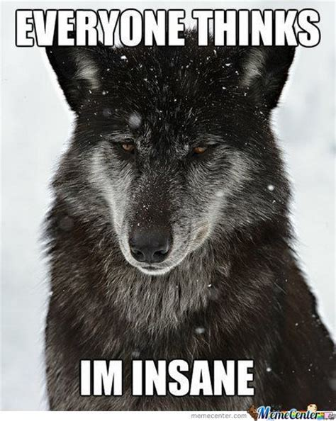Scene Wolf Meme - misunderstood insanity wolf by snajath meme center