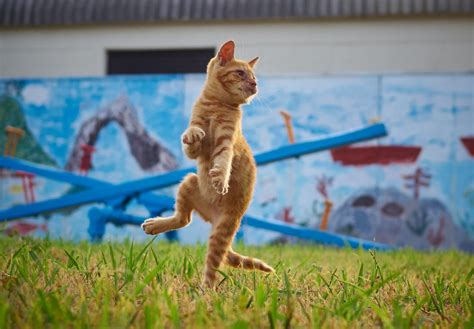 mortal tomcats photographer snaps flying cats inkung fu