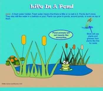animals   water habitats   grade