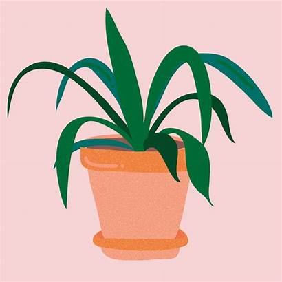 Plant Janine Giphy Animation Grow Care Pot
