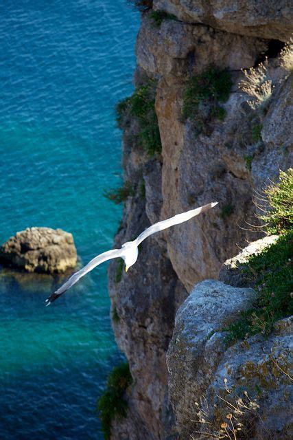 Il Gabbiano Tremiti by J L Gabbiano Prove Di Volo Isole Tremiti Italy