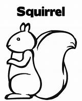 Squirrel Coloring Pages Print Crafts Printable Colouring Squirrels Cartoon Easy Clip Preschool Chihuahua Projects Cliparts Clipart Dog Prints Fall Activities sketch template