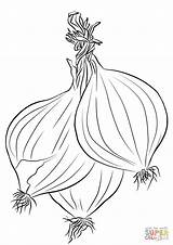 Coloring Onions Pages Three Printable Drawing Categories sketch template
