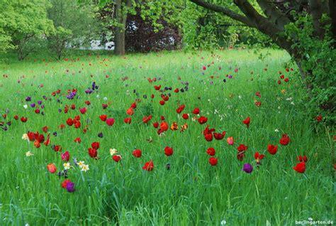 Tulipan Im Britzer Garten Berlingarten