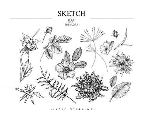 disegni di fiori bellissimi bellissimi disegni di foglie e fiori scaricare vettori