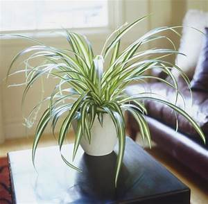Pflanzen Für Raucher : nasa empfiehlt diese 5 pflanzen reinigen die luft in deiner wohnung welt ~ Markanthonyermac.com Haus und Dekorationen