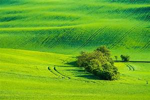 Green, Fields, With, Wild, Trees, Free, Stock, Photo
