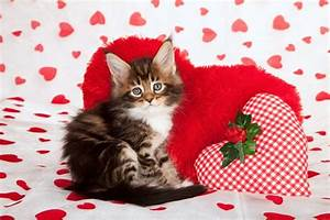 valentine kittens | We Rank the Lovability of Valentine's ...