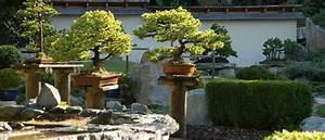bonsaiformen garten europa With whirlpool garten mit bonsai acer