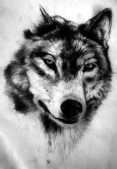 Wolf Tattoos Drawings
