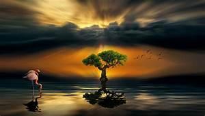 Sunset, Dark, Cloud, Lake, Alone, Wood, Flamingos, Art, Hd