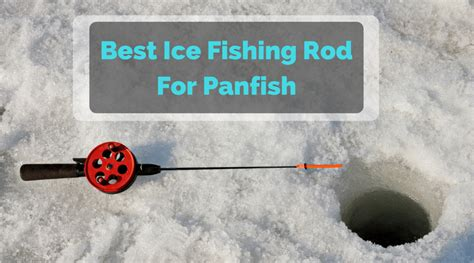 ice fishing rod  panfish    buy